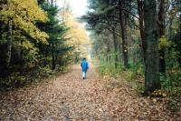 Abwechslung pur auf der kleinen Insel: Auch der Wald hat seinen Platz auf Amrum / Bildquelle (auch restliche Fotos): Sascha Brenning - Hotelier.de
