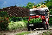 Bananen Transport im Kaffeedreieck