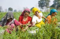 Indische Frauen bei der Ernte / Bildquelle: NürnbergMesse GmbH