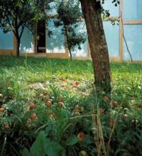 Biohotel - Ausschnitt mit Apfelwiese