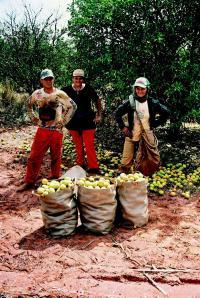 Auch diese Erzeuger profitieren von den Standards des Fairtrade-Siegels