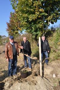 Von links: Zweiter Bürgermeister Paul Schwarz, Byodo-Geschäftsführer Michael Mossbacher und der Vorsitzende des Gartenbauvereins Herr Köppel starten das Pflanzprojekt / Bildquelle: Byodo Naturkost