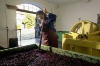 Foto: Deutsches Weininstitut