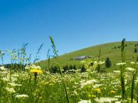 Mit 1.493 m die höchste Erhebung im Schwarzwald: Der Feldberg
