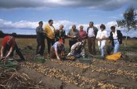 Kartoffelernte in der Lüneburger Heide (Bildeigner: Lüneburger Heide GmbH)