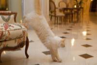 Die Katzen dürfen sich im Hotel relativ frei bewegen