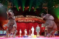 Der Zirkus-Hochadel aus der ganzen Welt gibt auch in diesem Jahr  außergewöhnliche und spektakuläre Shows zum Besten / Bildquelle: Kaus Media Services