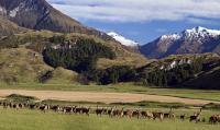 Fotocredit: Alle Neuseelandhirsch