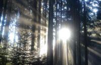 Erster Allgäuer Premium-Winterwanderweg in Oberstaufen / Bildquelle: Oberstaufen Tourismus GmbH