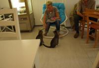 Andrea Kallmorgen bei der Raubtierfütterung im Pee Pee's Katzencafé mit Caruso und Pelle. Links oben der beliebte Kühlschrank mit den Wärmelüftungsschlitzen...