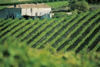 Weinberg bei Cognac / Bildquelle: Comité Régional du Tourisme Poitou-Charentes