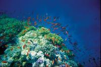 Ägyptens Unterwasserwelt ist berühmt., Bildquelle TUI Deutschland Unternehmenskommunikation