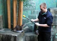 Aquarist Marten Lübke bringt Otterdame Bonnie dazu, auf die Waage zu klettern
