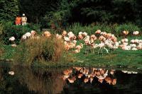 Flamingos im Vogelpark Walsrode / Bildquelle: TourismusMarketing Niedersachsen GmbH