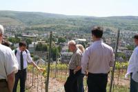 Das Weinanbaugeniet