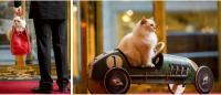 Kléopatre, die Birma-Katze / Bildquelle: Brenners Park-Hotel & Spa Baden-Baden
