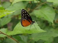 In der Nähe finden sich das wunderbare Schmetterlinghaus und...