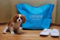 Hund Toni mit Wellnesstasche / Quelle: Hotel & Spa Larimar