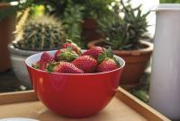 """Frisch gepflückt ist halb genascht: Ob frische Erdbeeren, ein kleiner Salat oder durchgezogener Rettich für das Abendessen auf dem Balkon: Die bunten Schüsseln und Schalen aus dem """"Freche Früchtchen""""-Sortiment von KAHLA geben Sommer-Genüssen ein Zuhause. Praktisch für draußen sind dabei die passenden Deckel — aus Holz, Porzellan oder Silikon. / Bildquelle:  KAHLA/Thüringen Porzellan GmbH"""