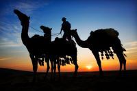 Kamele bei Sonnenuntergang / Bildquelle: Qatar Tourism Authority