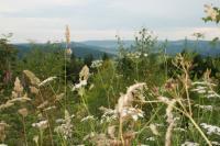 Eine Waldwiese im Sauerland / Bildquelle: Spaness