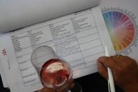 Wie schmeckt ein Wein?