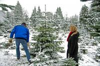 Weihnachtsbäume selbst aussuchen / Bildquelle: Ferienwelt Winterberg