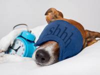 Clever, wer im Hundehotel entsprechende Produkte vorhält :-)
