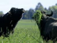 Unter der Eigenmarke Transgourmet Ursprung bietet der Lebensmittelgroßhändler Produkte aus nachhaltiger Landwirtschaft an. / Bildquelle: Transgourmet