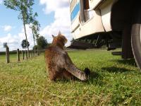 Auch Haustiere fühlen sich im Wohnmobil wohl / Bildquelle: Hotelier.de