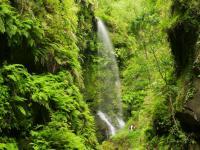 La Palma Cascada Los Tilos / Bildquelle: © Saúl Santos