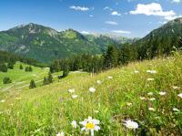 Typische Allgäuer Wiesenlandschaft, wie sie herrlicher nicht sein kann