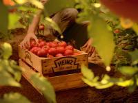 Bio-Tomatenkiste / Bildquelle: Beide H.J. Heinz GmbH
