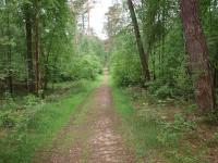 Der Weg führt zu mehr Natur(hotels) / Bildquelle: Hotelier.de