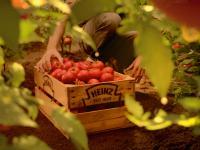 Bio-Tomatenkiste - Nachhaltigkeit bei Kraft Heinz / Bildquelle: Alle Bilder Kraft Heinz Company