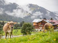 Transgourmet Ursprung Allgäuer Käse / Bildquelle: Alle Transgourmet
