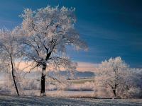 Raureif am Morgen: Themenwege durchziehen Murnaus Zuckerguss-Landschaft. / Bildquelle: Tourist Information Murnau