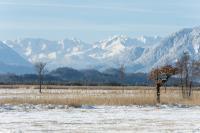Verschneite Gipfel in der Ferne, gefrorenes Moos unter den Sohlen. / Bildquelle: Simon Bauer