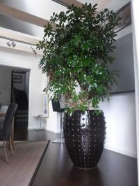 Mit grünen Pflanzen bessere Raumluft genießen / Bildquelle: Hotelier.de