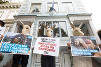 Auch in San Francisco demonstrierten PETA-Aktive vor dem griechischen Konsulat. / Bildquelle: © PETA USA
