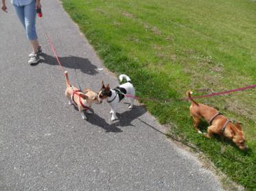 Hundehaftpflicht Leistungen - besonders wichtig im Urlaub