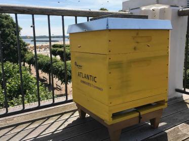 Atlantic Grand Hotel Travemünde baut sein Nachhaltigkeitskonzept aus