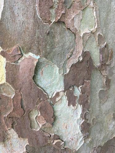 aquatec Fassadenreinigung wird Klimaschutz-Partner von Plant-my-Tree