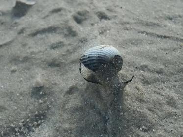 Norderney: Meer und Strand für einen Tag