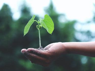 Nachhaltigkeit 2.0: Erster virtueller IST-Nachhaltigkeitstag